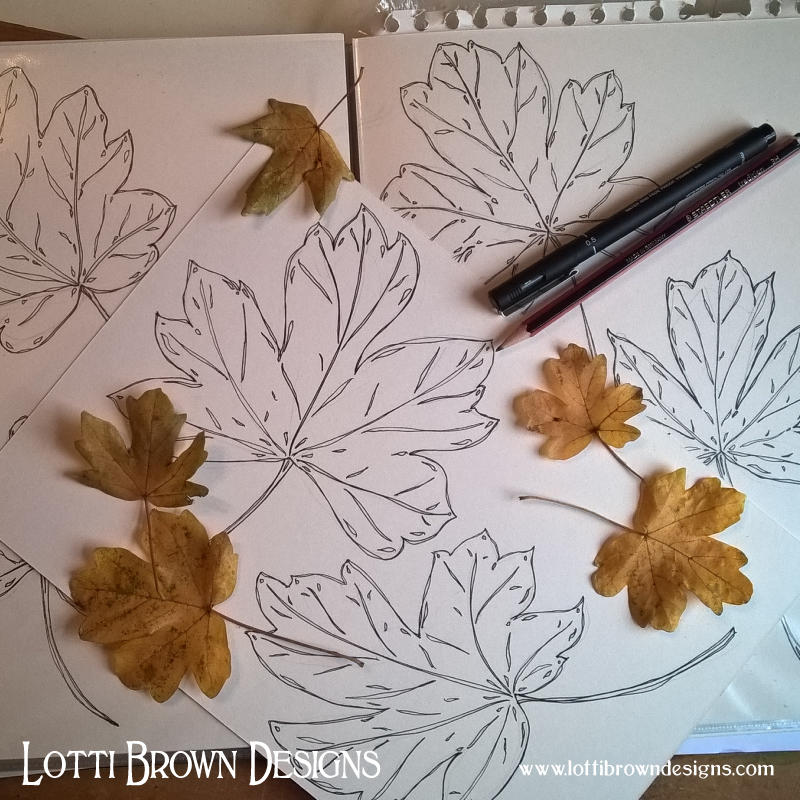 Drawing hedge maple leaves found on a walk