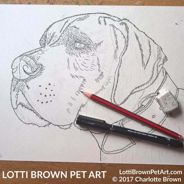 Starting my Great Dane drawing