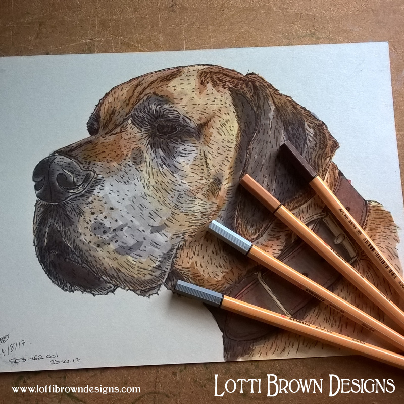 Great Dane drawing - click image to see how the drawing becomes the artwork