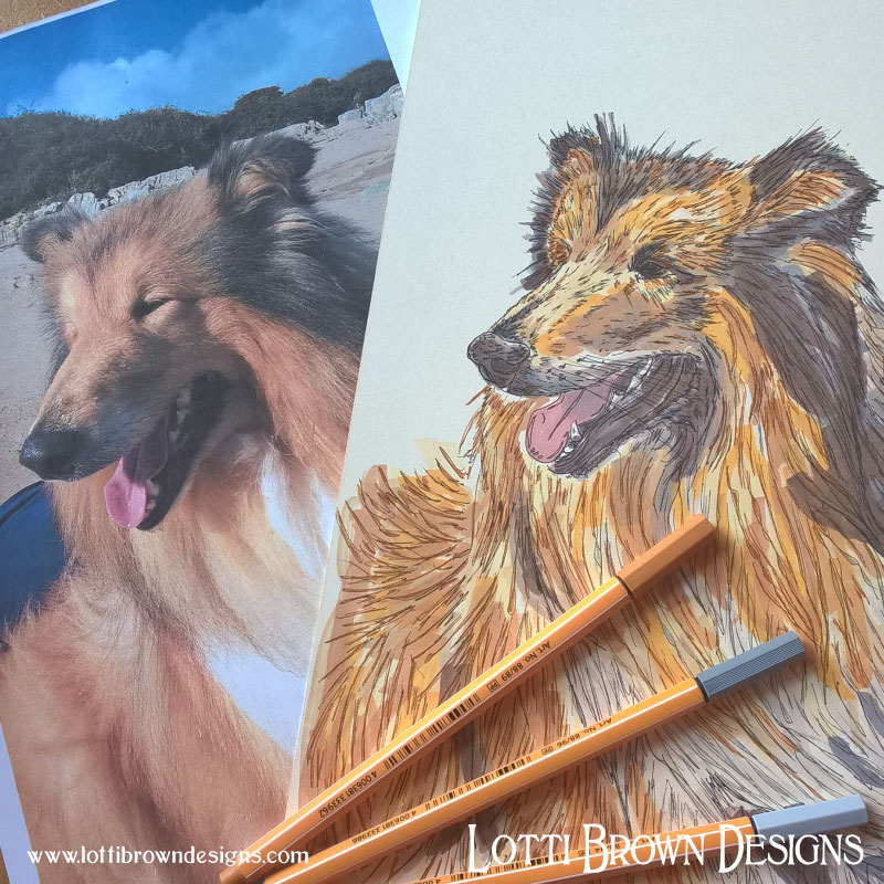 The coloured rough collie drawing