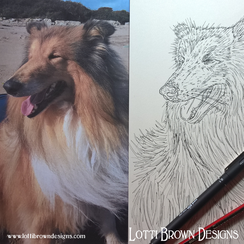 Starting my rough collie artwork with a line drawing