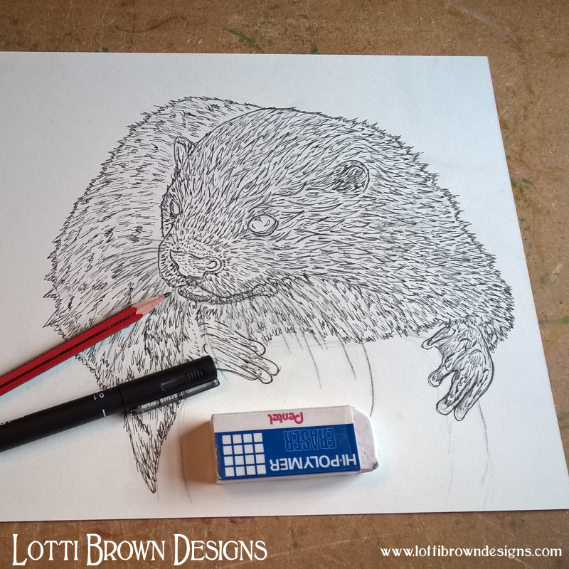 Starting my otter drawing