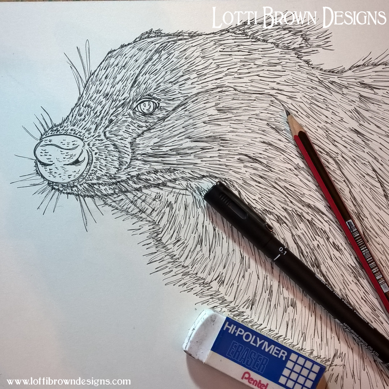 Starting my badger drawing