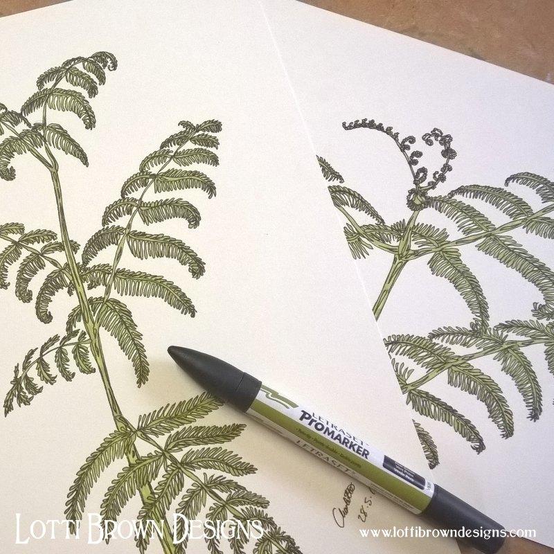 Bracken drawings