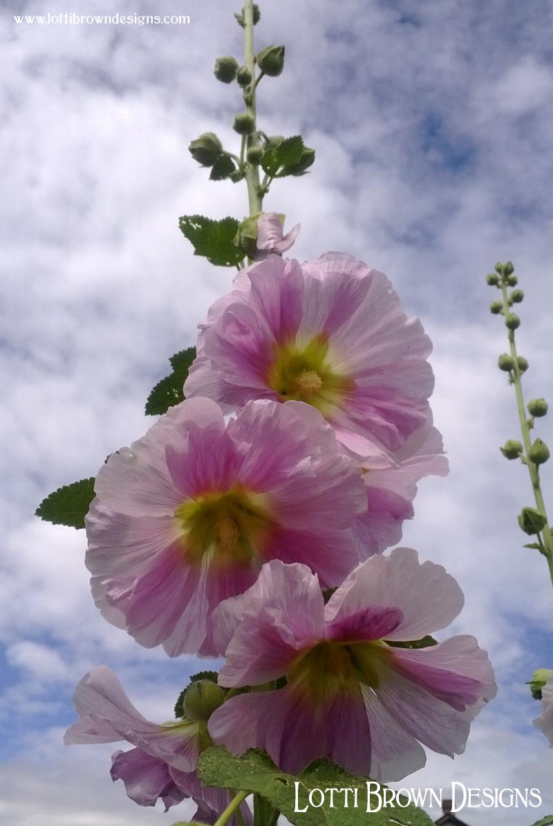 Summer skies and Joyful Blooming