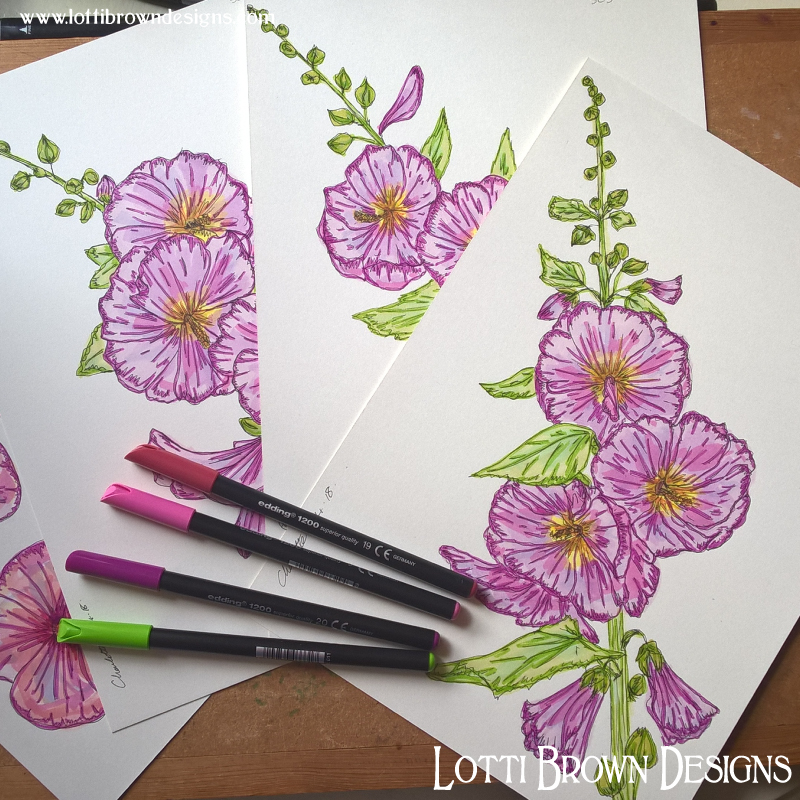 Adding colour to the hollyhock drawings