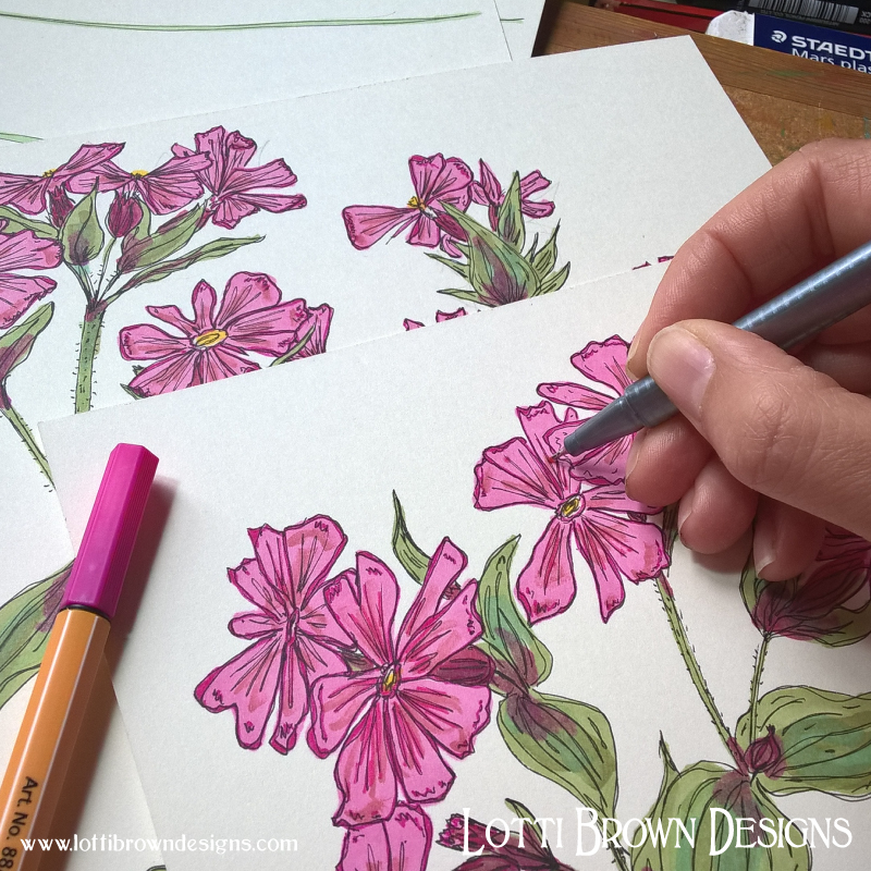 Adding detail to the Red Campion widlflower drawings
