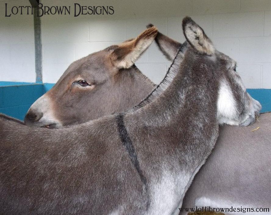 donkeys_pic_2.jpg
