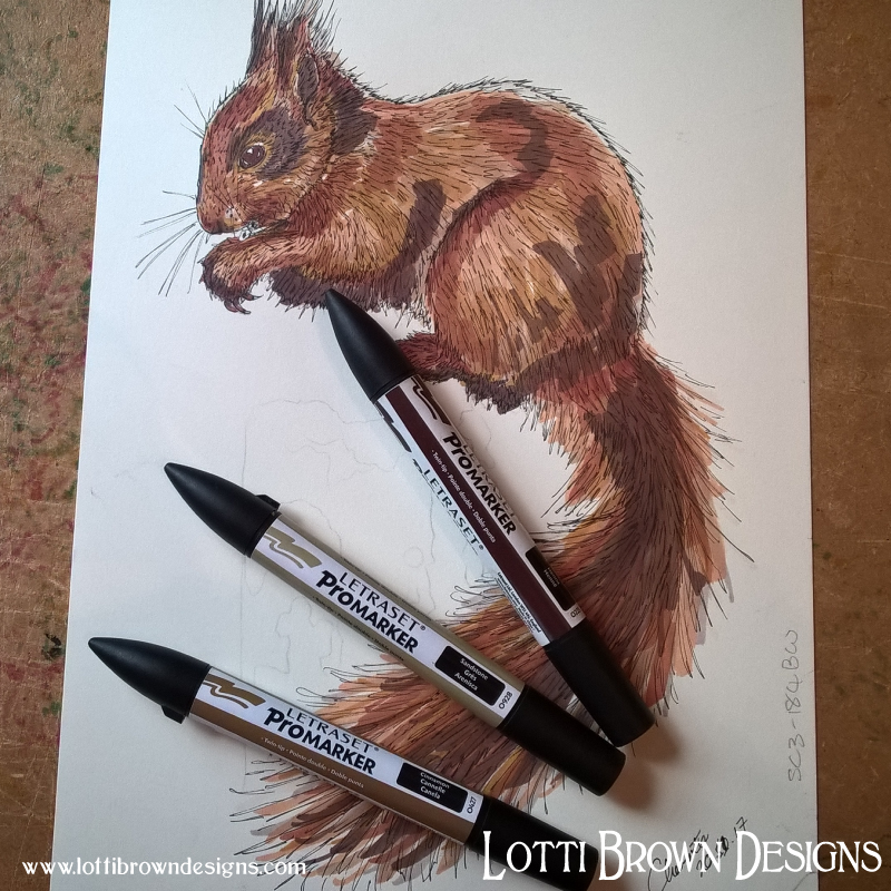 From drawing to digital… Explore behind the scenes of the artworks in my galleries below… - Squirrel drawing in progress…