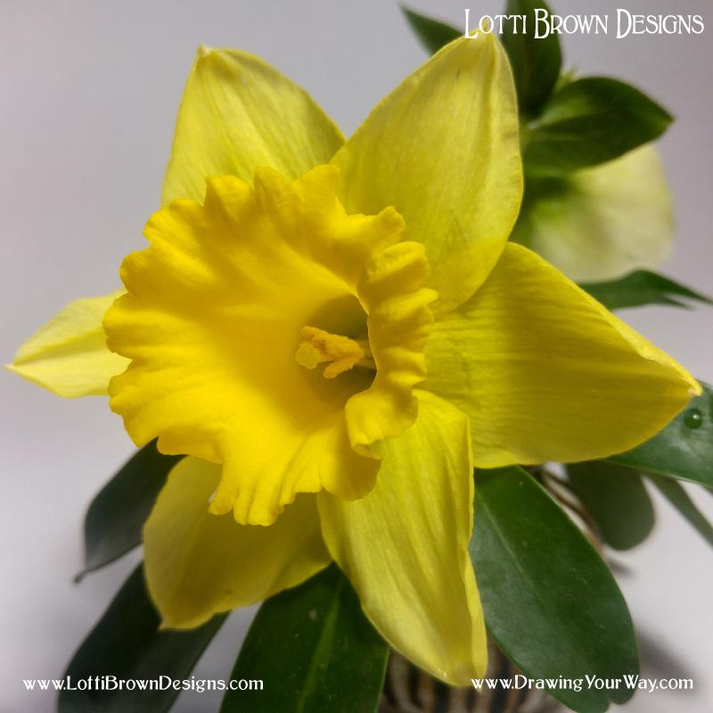 Daffodil drawing inspiration