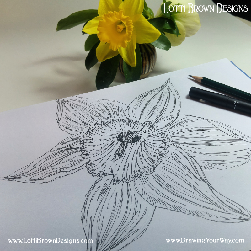 My daffodil drawing