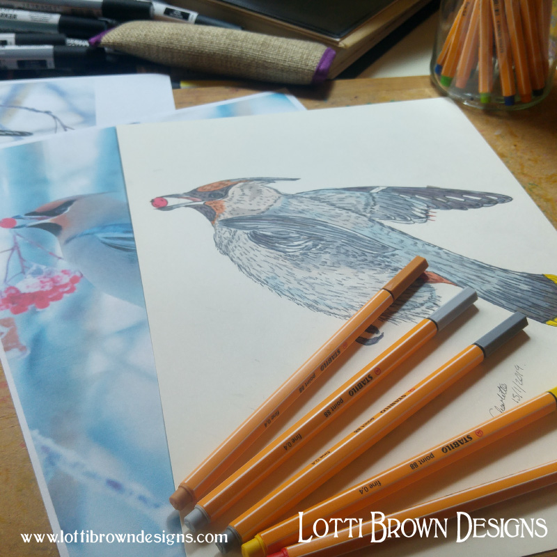 Drawing a waxwing - click image to see how the artwork was made