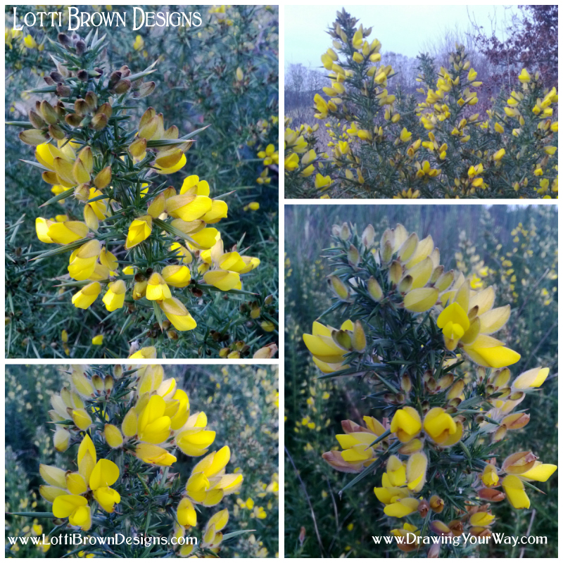 Feeling inspired by nature - a splash of colour in early spring - yellow gorse flowers