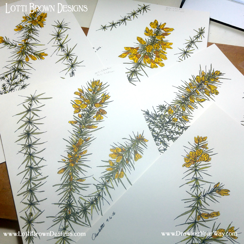 Gorse drawings from photos and inspirational moments in nature