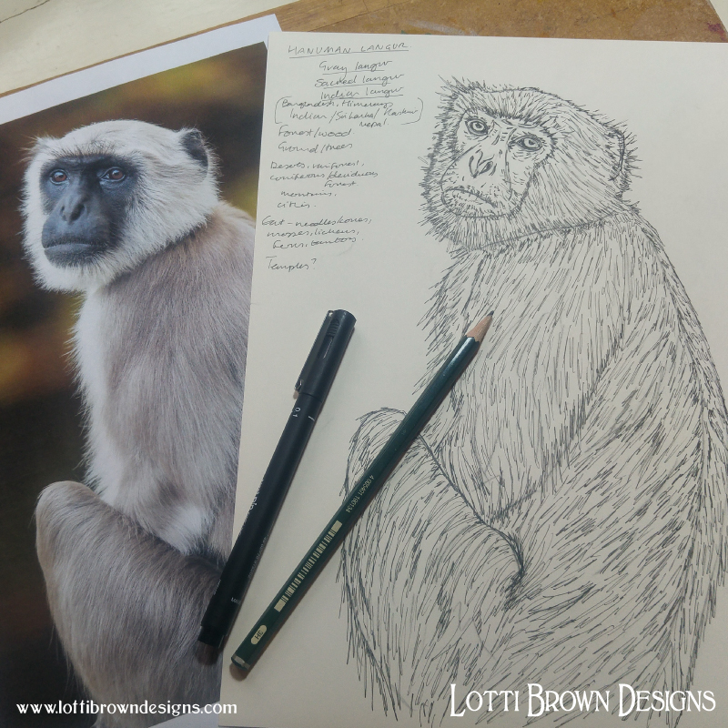Starting my Gray Langur drawing