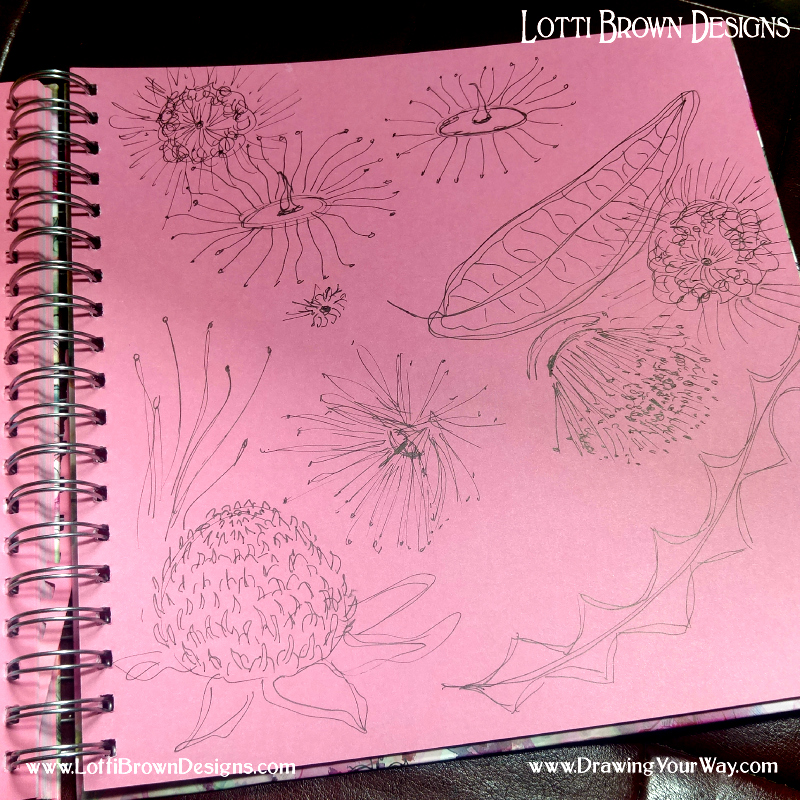 Drawing quick sketches in my sketchbook of flowers and leaves - your sketchbook can be messy and immediate
