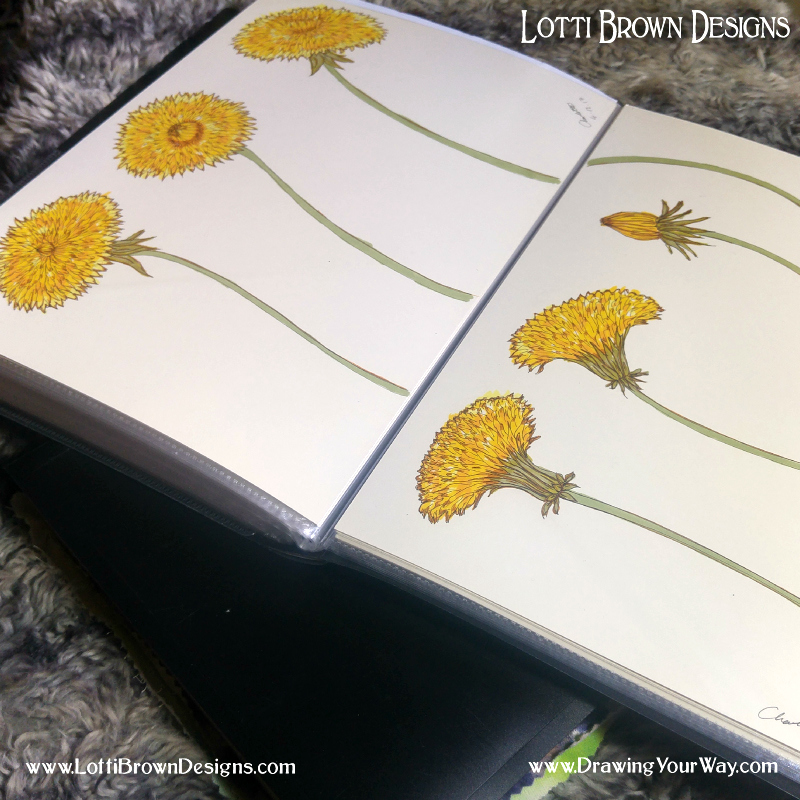 Showing how my loose sheet drawings are stored together in my display sketchbooks