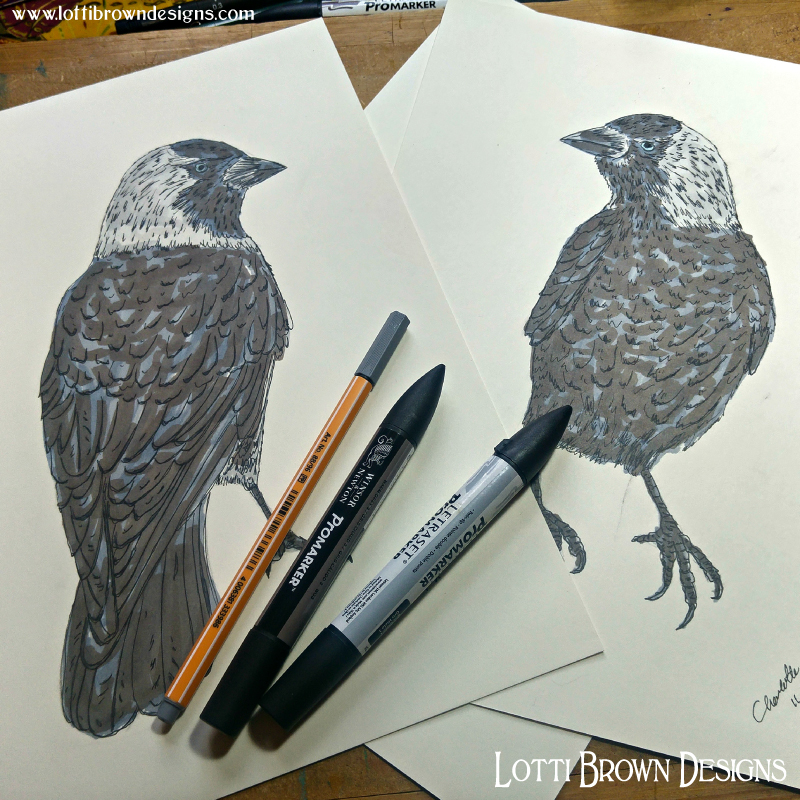Jackdaw pen & marker drawings