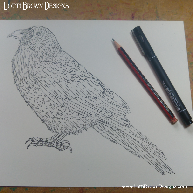 Starting the raven drawing