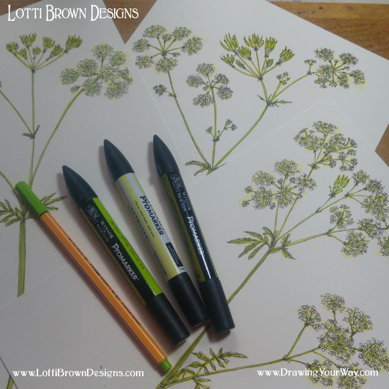 Cow parsley drawings