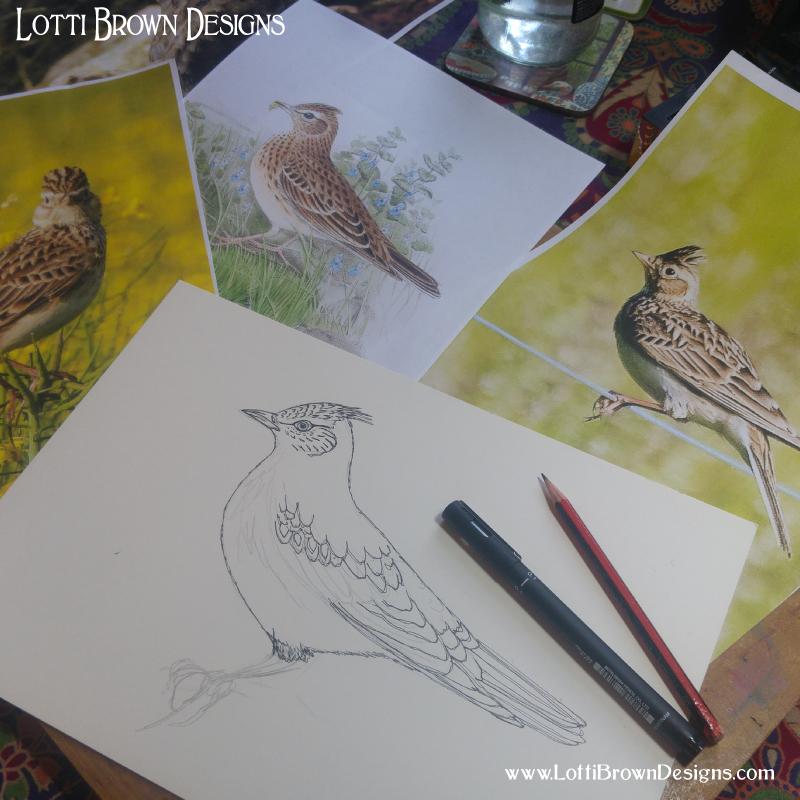 Starting my skylark drawing