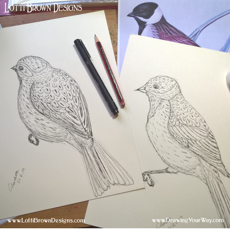 Drawing in Pen
