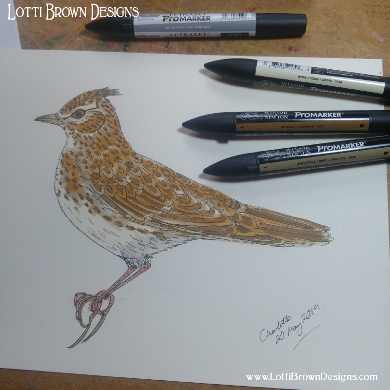 Drawing skylark - click to go behind the scenes