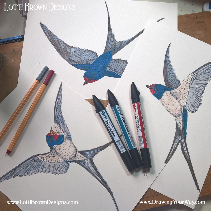 Adding colour to the swallows drawings