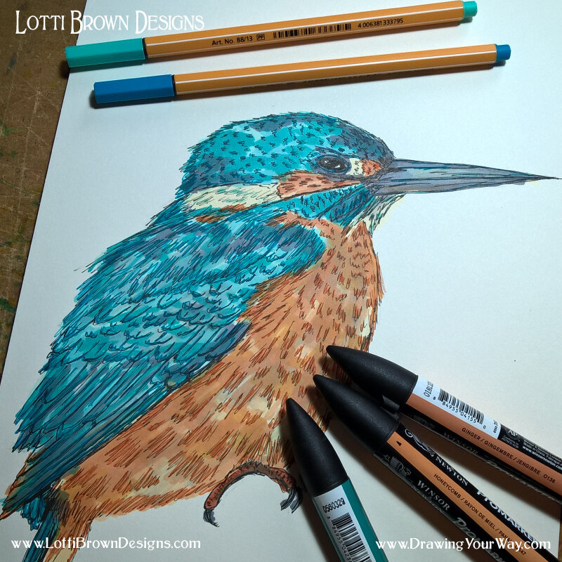 Kingfisher drawing - click to see the art process