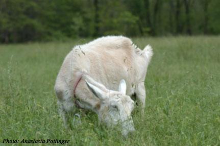 Venus enjoys nibbling grasses.