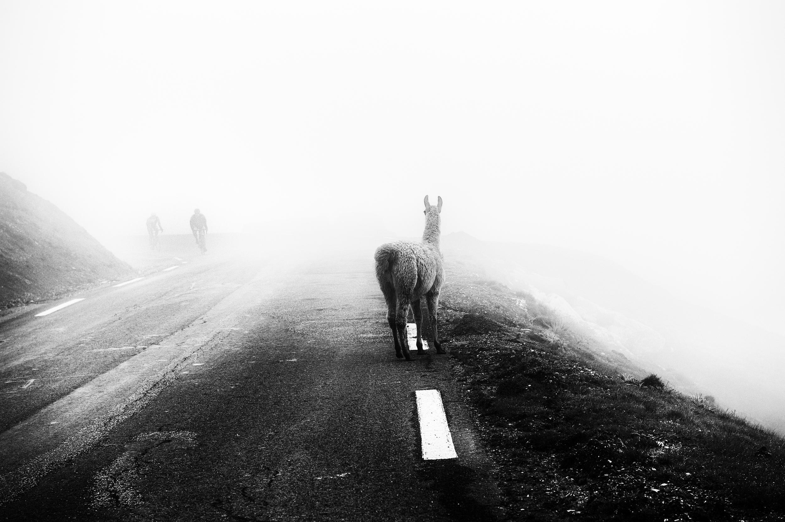 Col du Tourmalet check list:  Mist? Check. Cyclists? Check. No visibility? Check. Llama? Check.