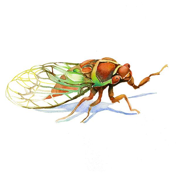 Cicada I