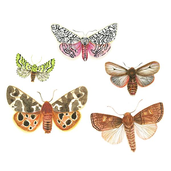 Moth Gathering