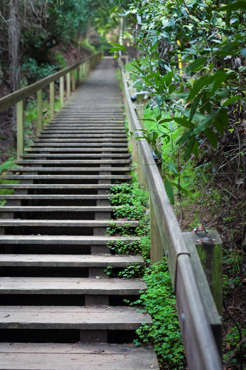 _MG_0017_steps.jpg