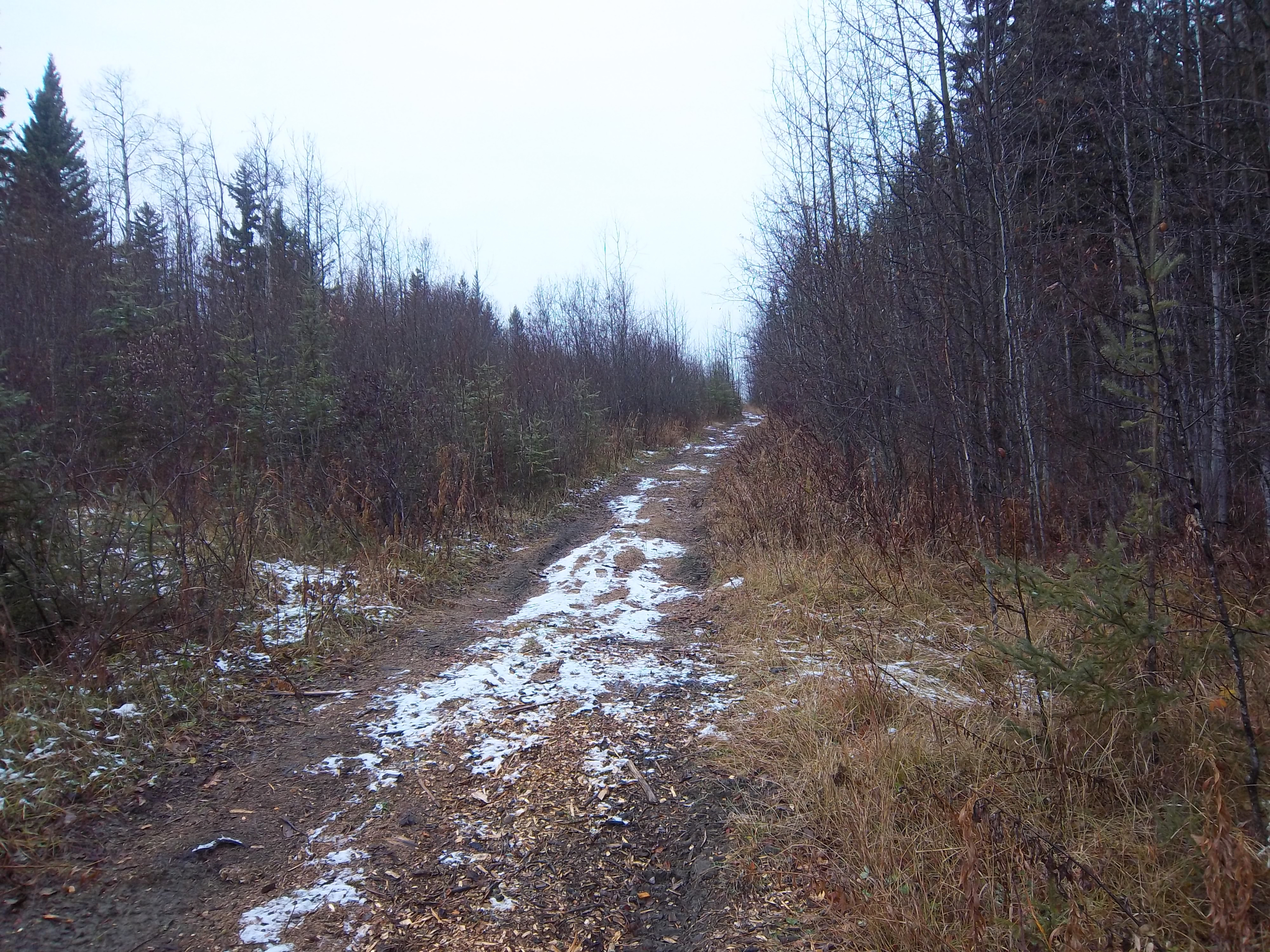 Limited Environmental Overview for Land Use Planning – Cold Lake, Alberta