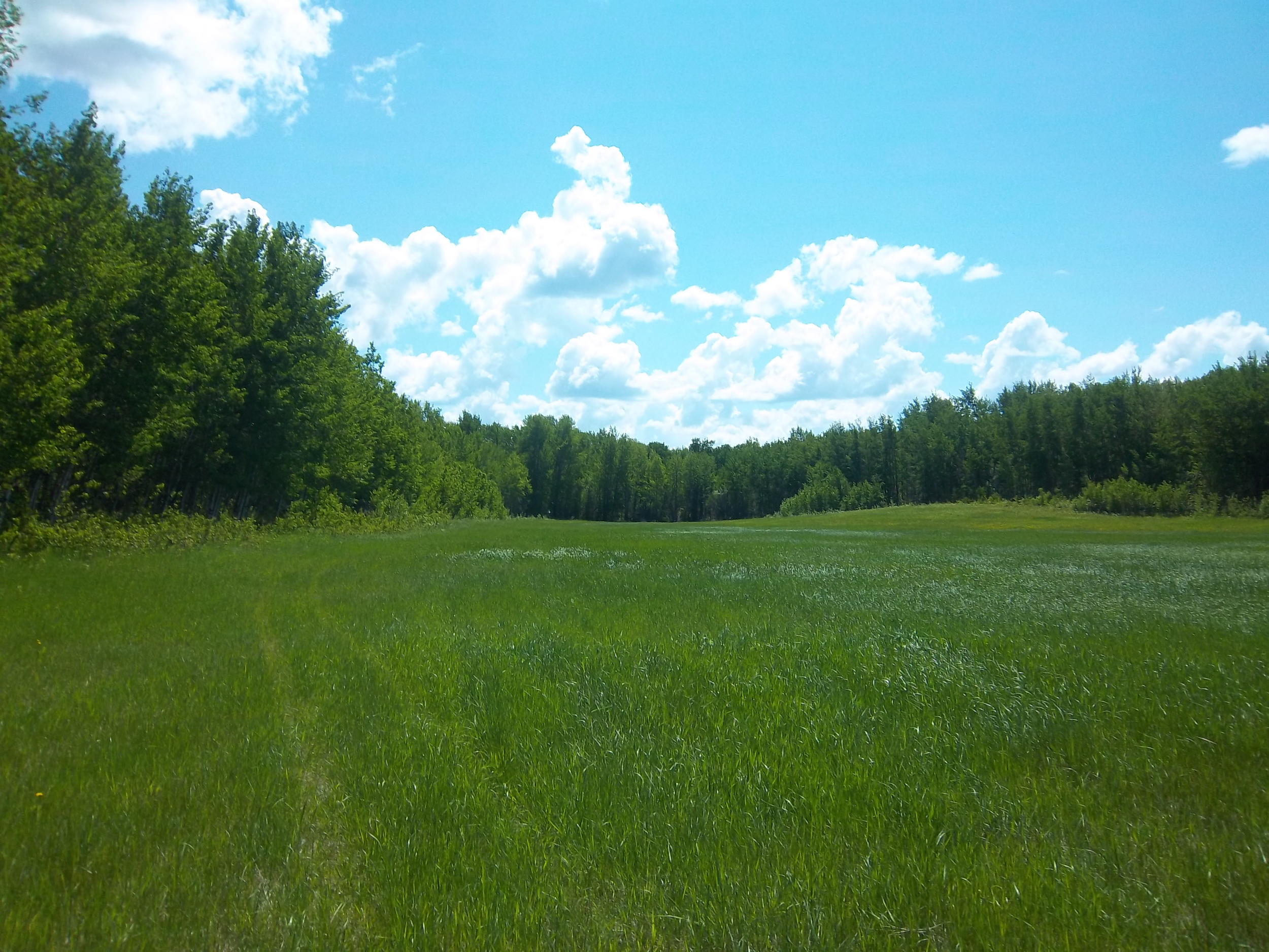 Biophysical and Wetland Assessment – Lac La Biche, Alberta