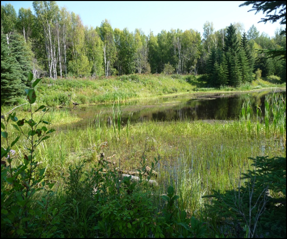 Wetland Habitat Bank Initiative – Alberta Transporation