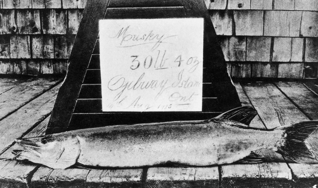 A particularly admirable catch – such as this 30-pound muskellunge, caught in 1934 – deserved to be displayed and photographed.