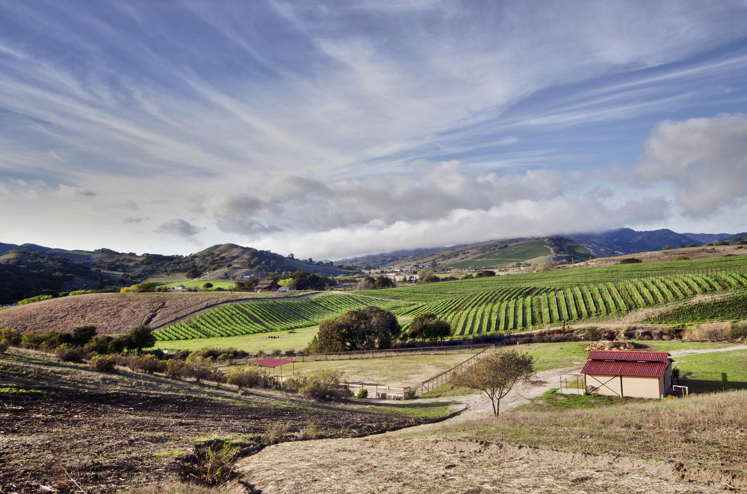 california-2014-01.jpg