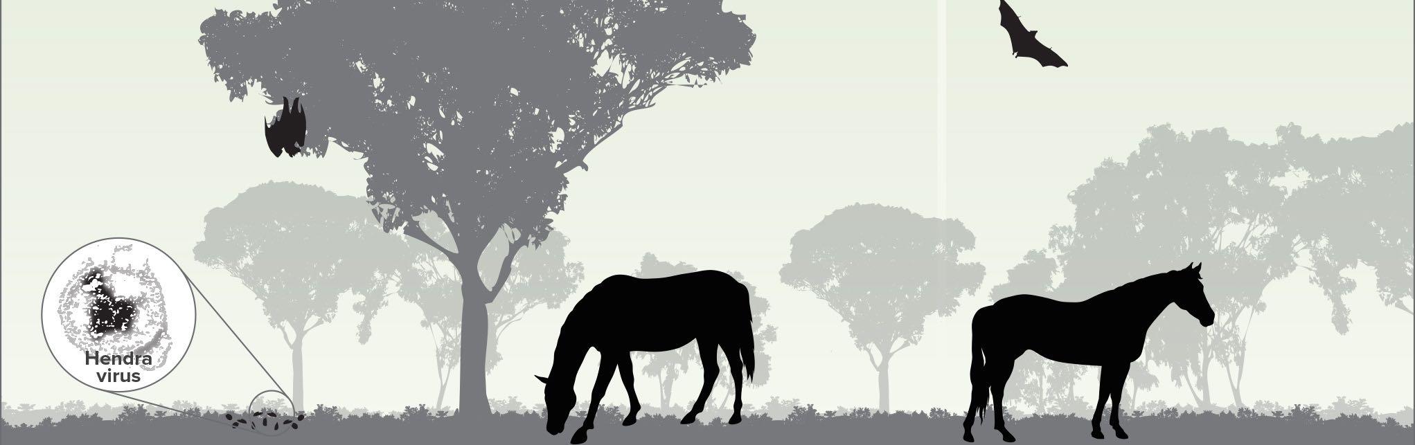 HorseRiskFactors woTEXT2.jpg
