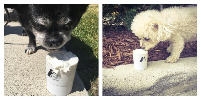 Who wants a Puppiccino?