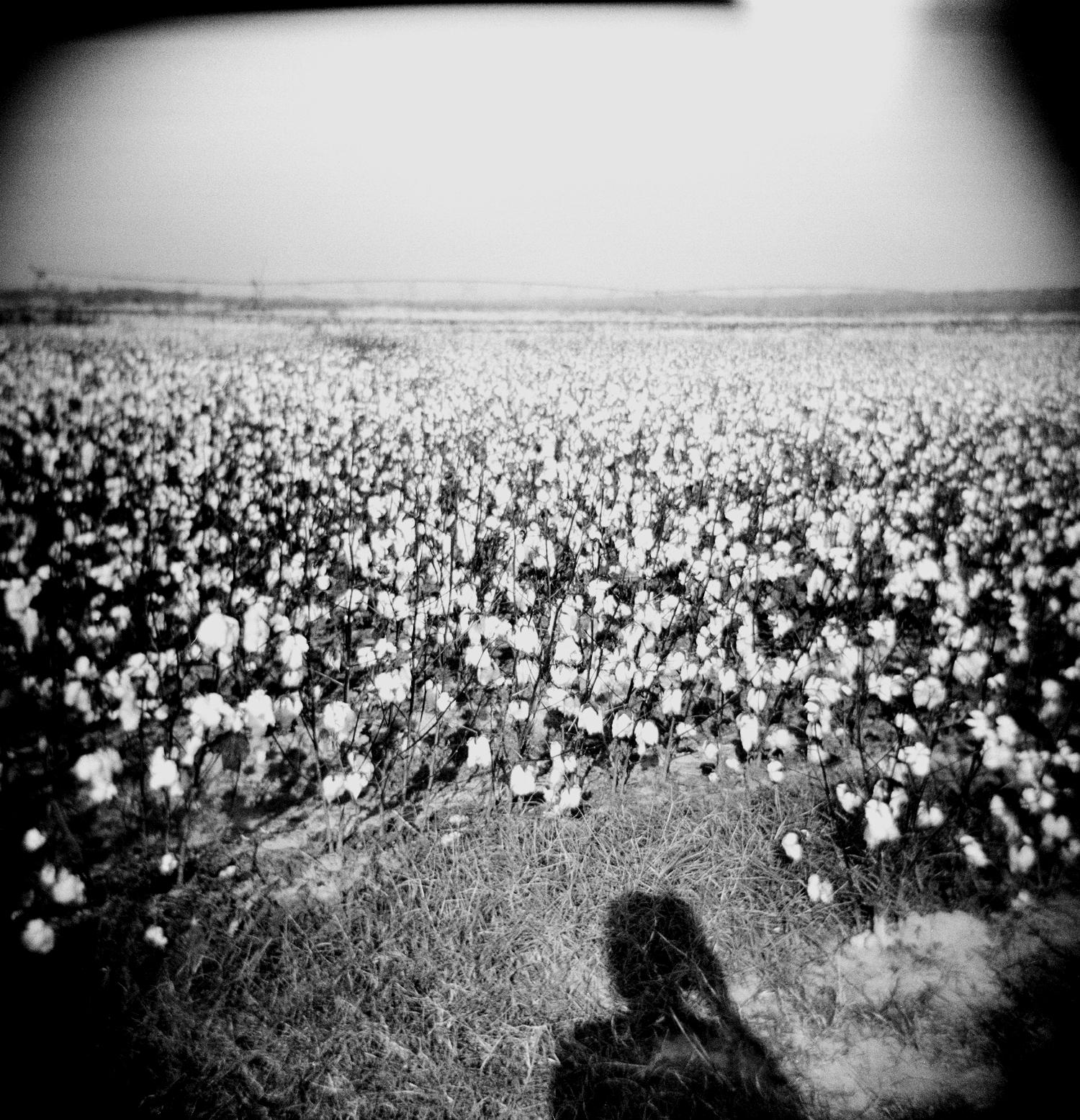 cotton shadow.jpg