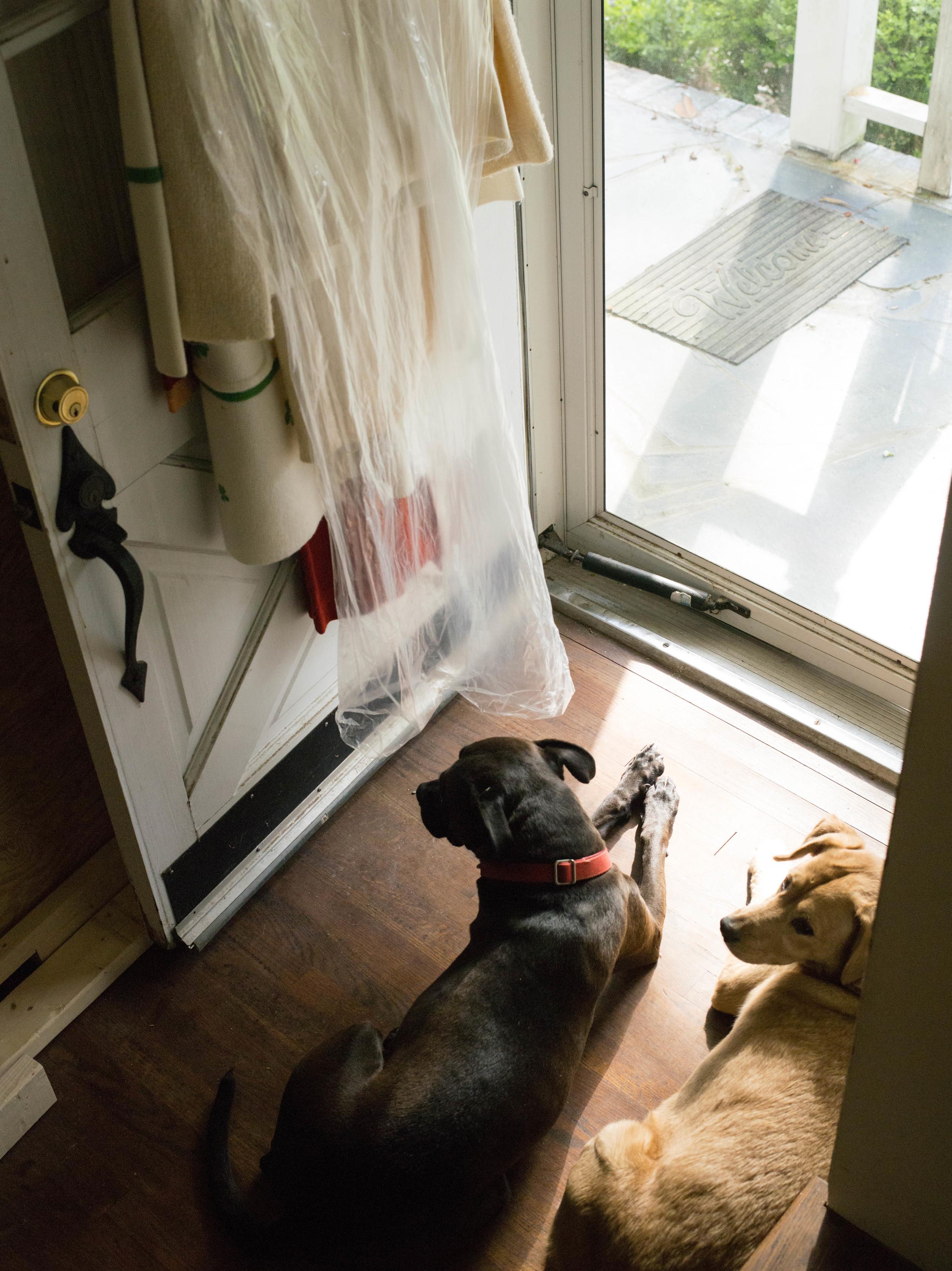 dogs in door way.jpg