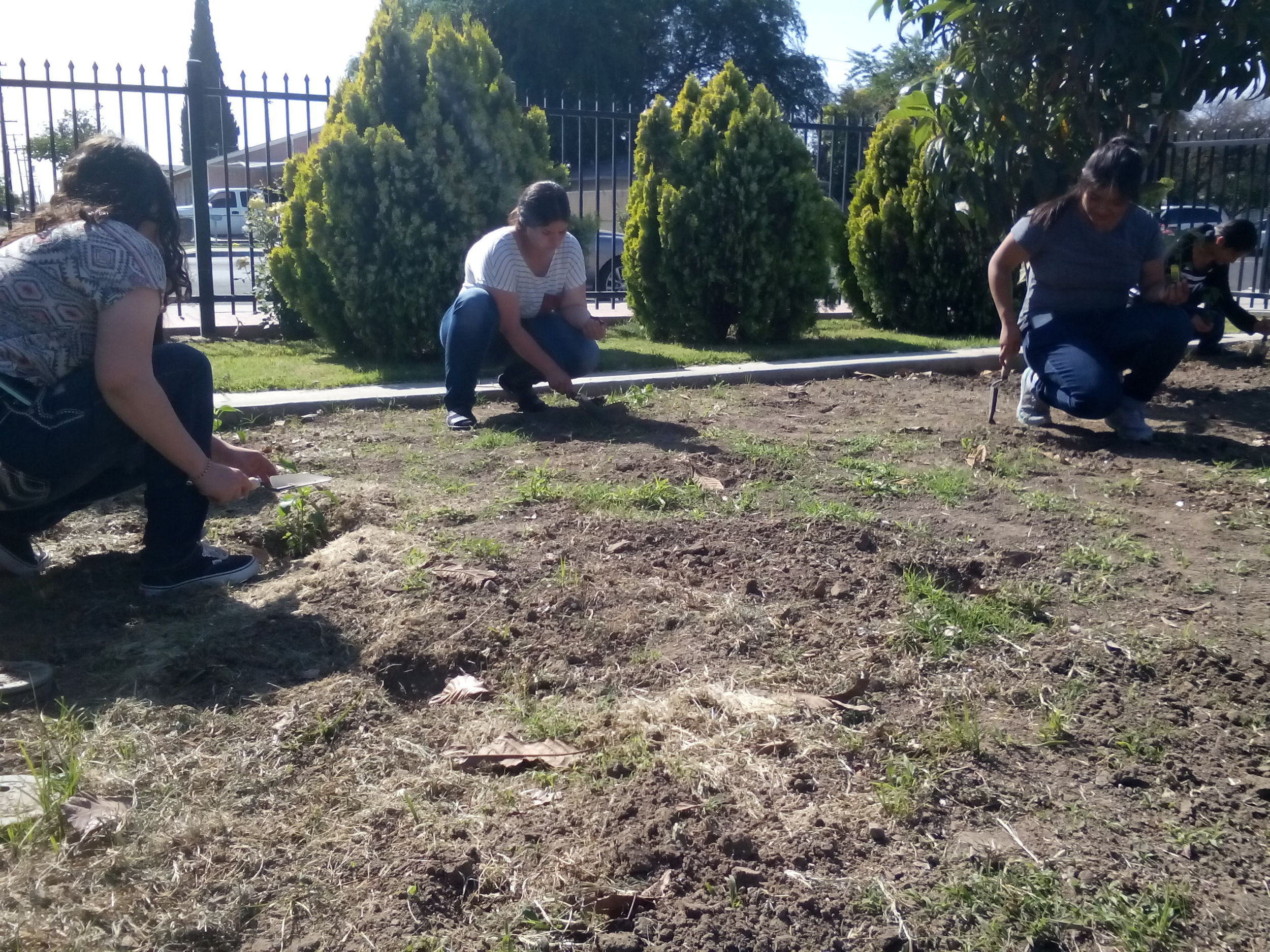 In celebration of Arbor Day, Madera Youth Leaders and kids from the Madera Child Development Center preschool planted their peas and peppers in two plots at our community garden. A group of six volunteers from Madera Collegealso joined us to pull weeds out of the plot along Lake street.
