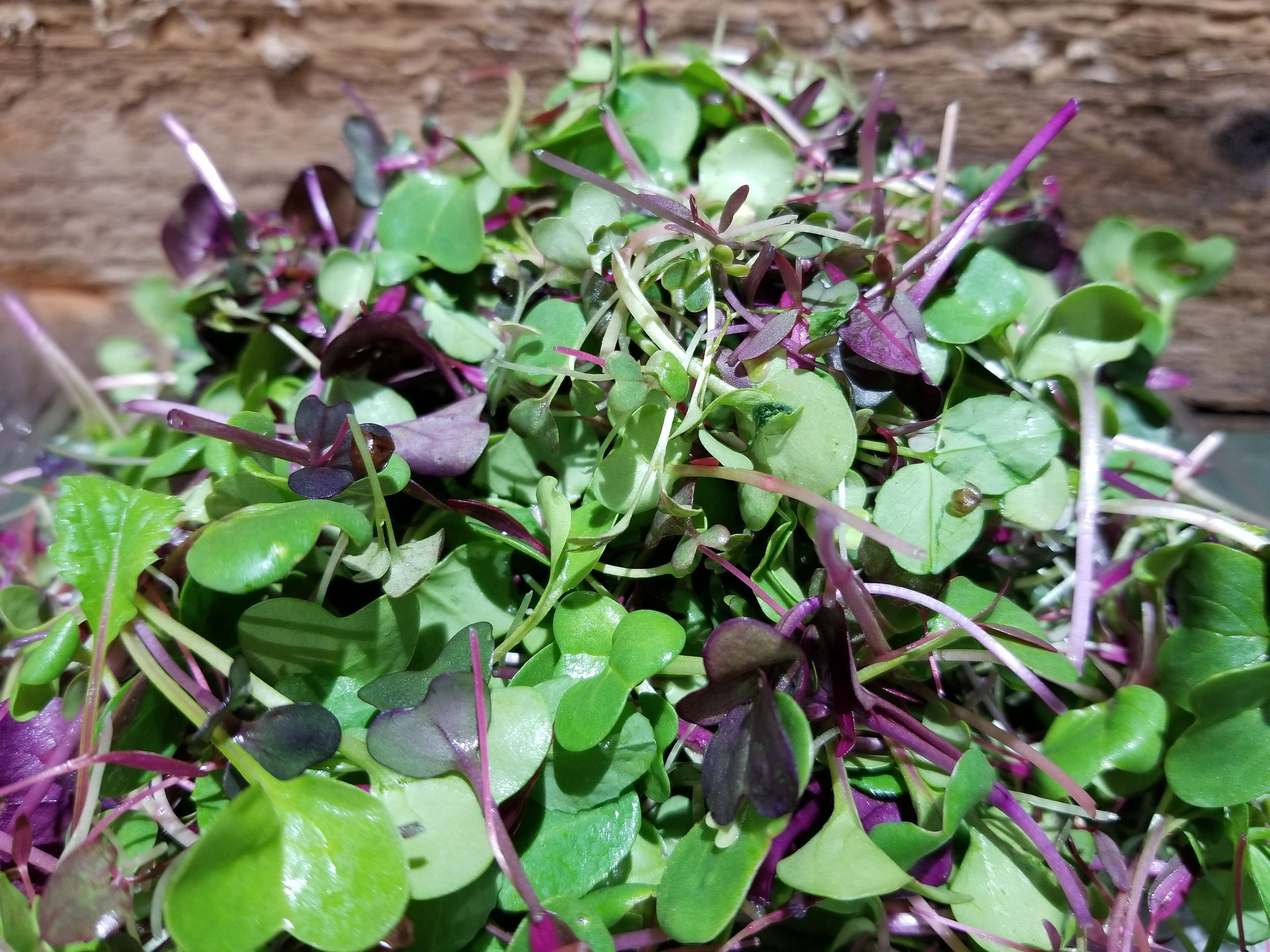 Microgreens - Rainbow Mix -broccoli, red cabbage, kale, kohlrabi, mustard, radishRadish MixCilantro - available upon request
