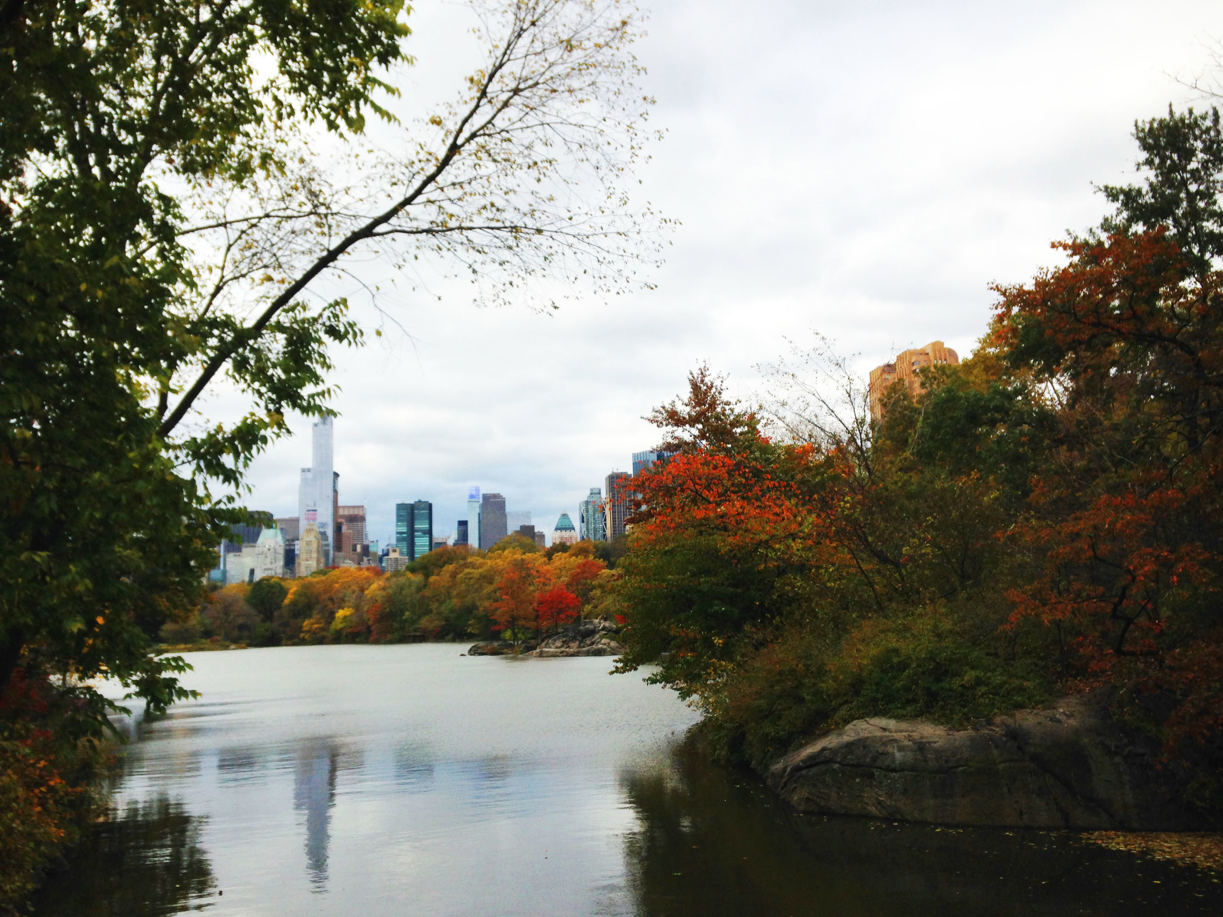 Looking from Central Park to the Midtown skyline