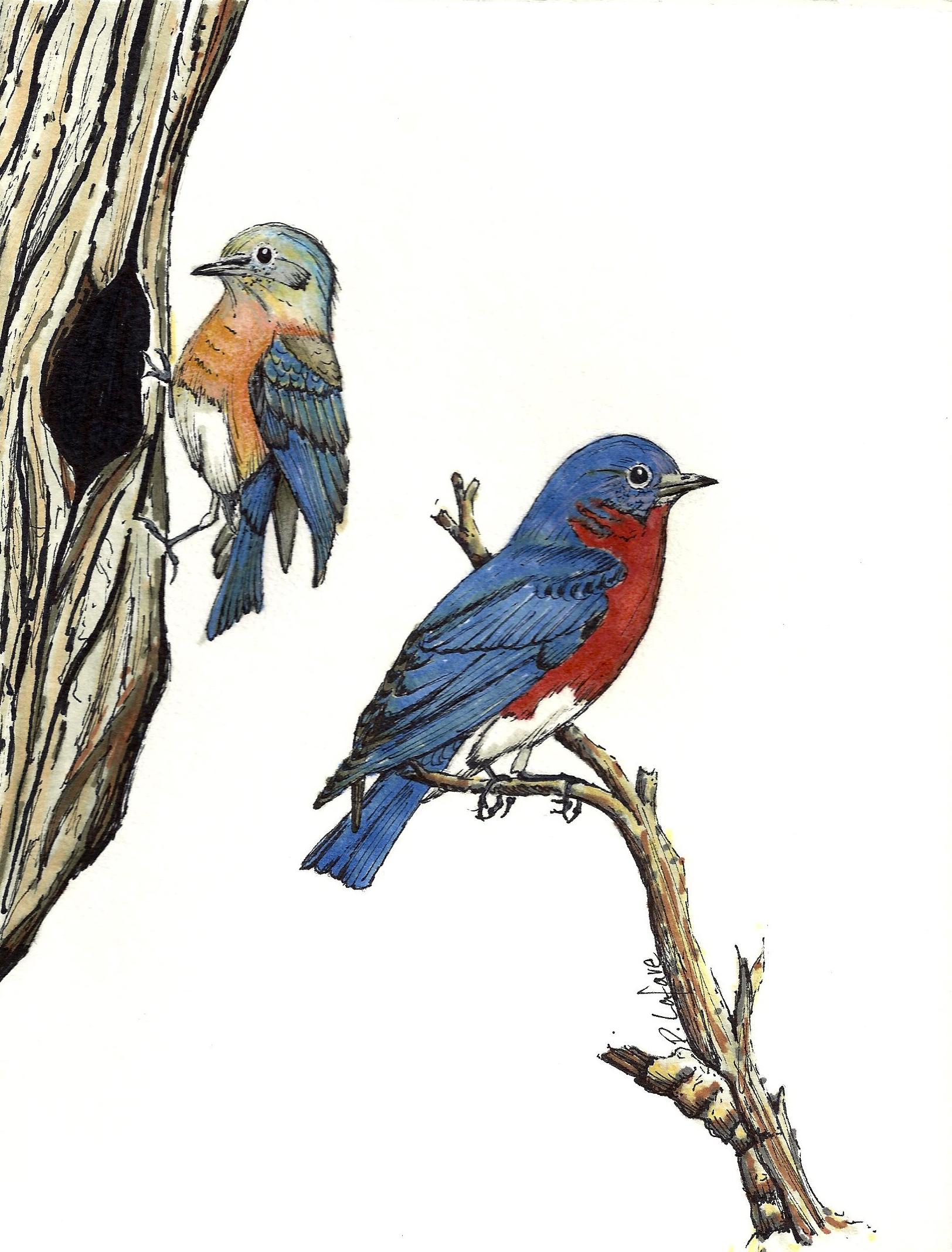 BLUEBIRDS | 2012