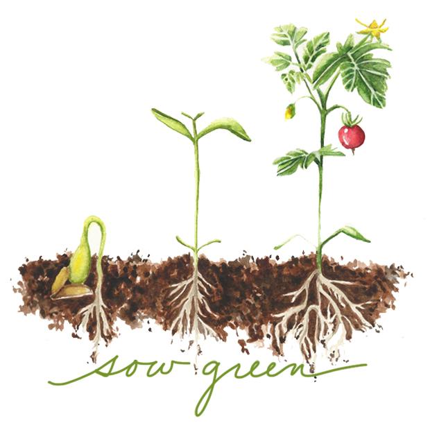 Sow Green Logo Green.jpg