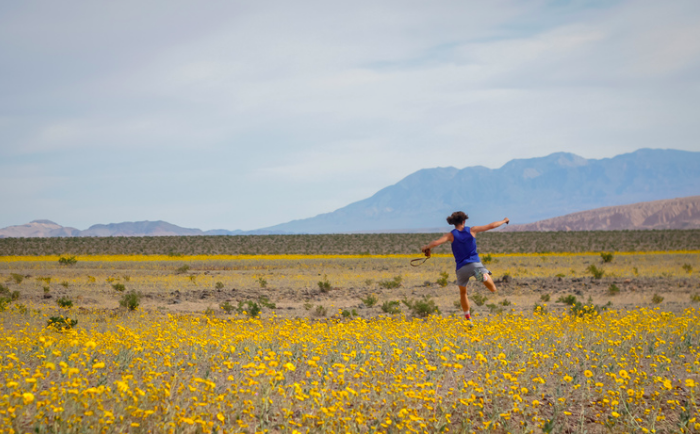 The 2016 superbloom at Death Valley National Park