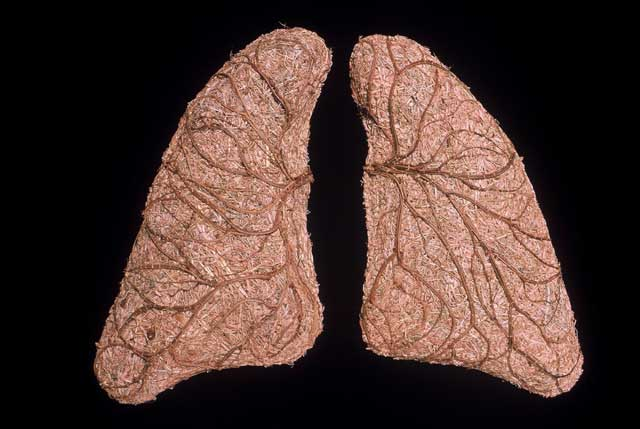 Lungs of the Murray